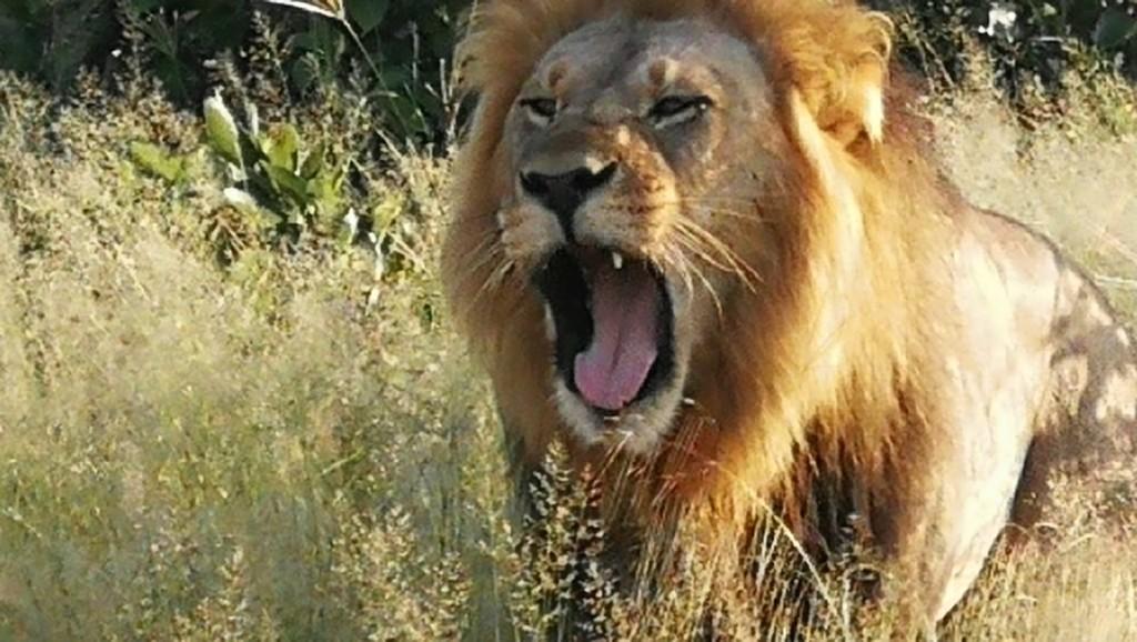 Botswana Savuti Safari